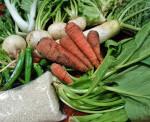 「菜祝ぎ菜園」野菜はお互いさまの精神